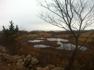 I do not know which pond was Mary Oliver's. This in near Champlin Farm, Block Island
