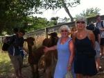 A walk by North Light Fibres' alpacas