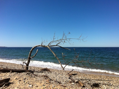 Spring growth, buds on what seems to be just driftwood. Life happens.