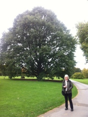 this is Sheila and a quite beautiful tree